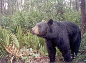 Lawmakers to address conservation spending, bear-human conflicts