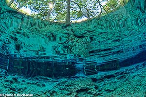 Ginnie Springs, A Magical Underwater World
