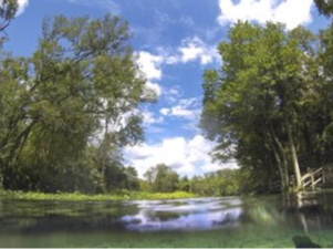Council rallies defenders to protect Florida springs