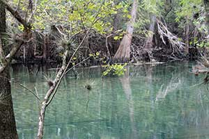 A Visit to Fanning and Manatee Springs State Parks