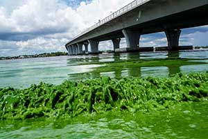 Florida's algae problem stems from Lake Okeechobee pollution