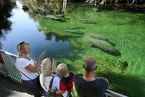 Chilly St. Johns sends manatees to Blue Spring