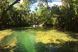 Chassahowitzka River Kayak Adventure