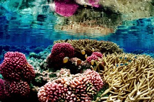 Coral Reefs of Florida to Disappear by 2030 Due to Climate Change