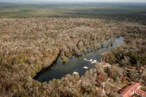 Why is Wakulla Springs' water turning brown?