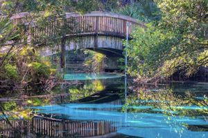 Fern Hammock Springs is a hidden gem