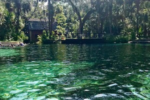 Juniper Springs and the National Forest