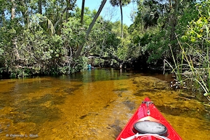 Kayaking Juniper Creek