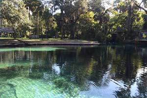 You are the Roots: Juniper Springs