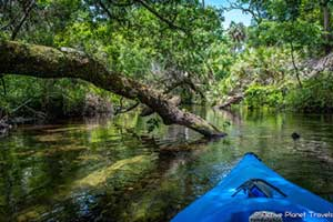 Florida Adventures: Kayaking in Juniper Springs State Park
