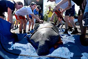 Mom and daughter manatees returned to Florida waters