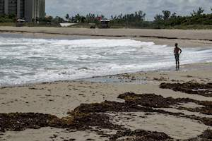 Red Tide bloom now touching all three of Florida's coasts