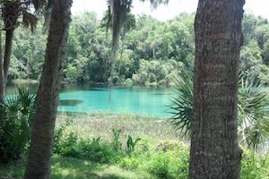Explore the Rivers and Springs near Tampa, FL