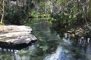 Rock Springs Run at Kelly Park, Apopka, FL