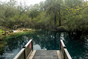 Royal Springs near Live Oak, Florida