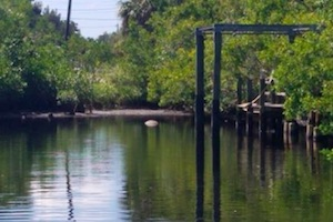 Six more manatees found dead, red tide the suspect