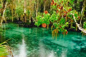 Clear Water in Crystal River, Florida