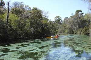 Paddle Boarding Weeki Wachee