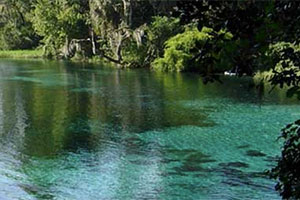 Springs in West-Central Florida