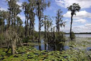 Trump wetlands rule rollback makes about 6 million acres in Florida unprotected