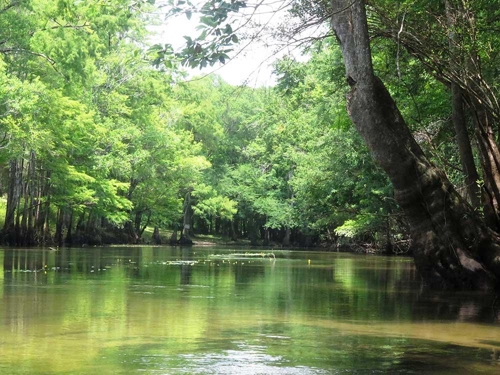 Cypress Spring Vernon Florida Florida Springs
