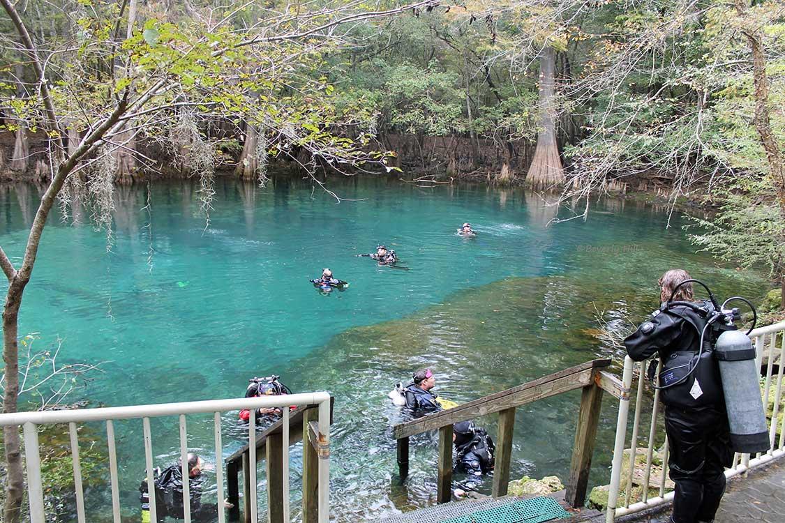Manatee Springs Chiefland Florida Florida Springs