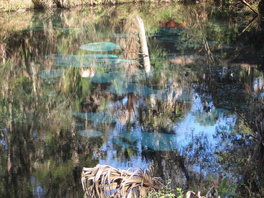 fern hammock fern hammock springs   ocala national forest florida   florida      rh   floridaspringlife
