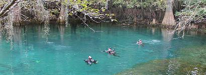 Divers at Manatee Springs