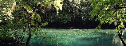 Manatee Springs Calm