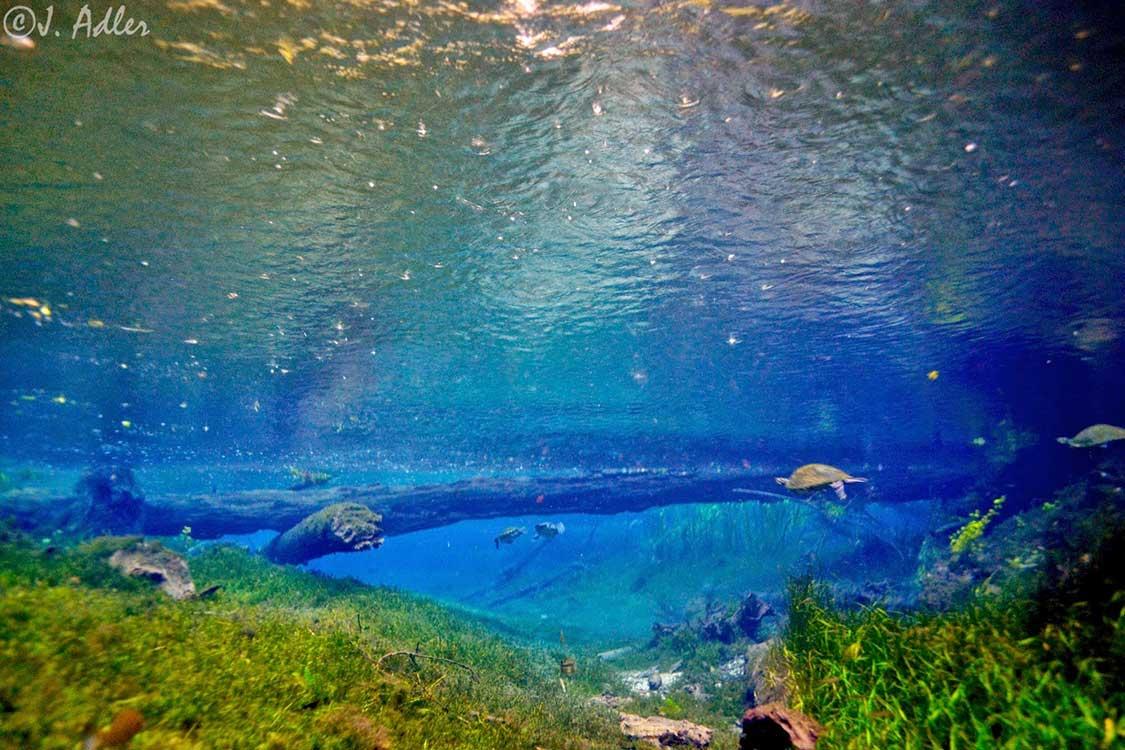Naked Spring - High Springs, Florida - Florida Springs