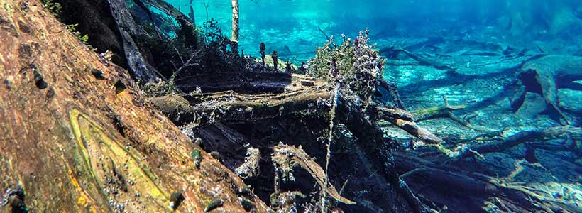 JonMonFish Imagery | Cypress Realm - A display of blue wonder surrounding the cypress tree lined banks of the 2nd magnitude spring.