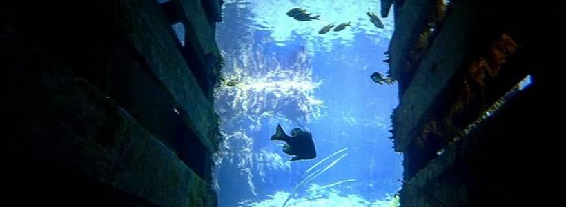 Joshua Birmingham | Underwater Travel