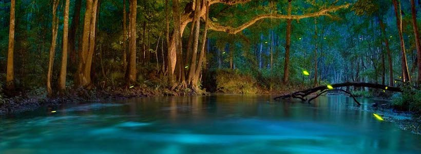 Florida Nature Photography | River of Dreams ? Fireflies on the Ichetucknee