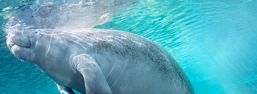 Florida Nature Photography | Manatees loud and clear