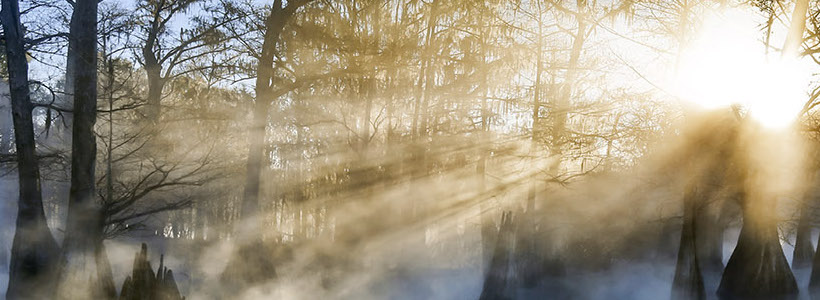 Florida Nature Photography | Winter's Breath
