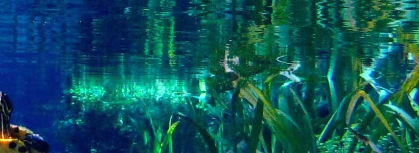 Mermaid of the Springs | Good Morning Sunshine