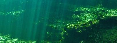 Volusia Blue