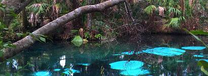 The Beautiful Blue Waters Of Fern Hammock Springs