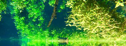 Jitterbug Spring Reflection.  Upside down?