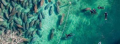 Manatees from above