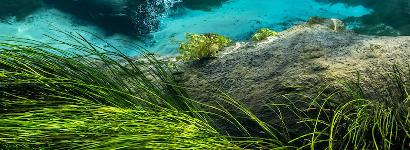 Florida Nature Photography: Gilchrist Blue Springs State Park