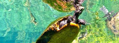 The Better to Tickle You With