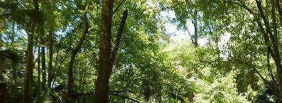 Minnows Above and Below